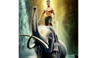 junglee trailer vidyut jamwal action packed avatar pooja sawant asha bhat gorgeous